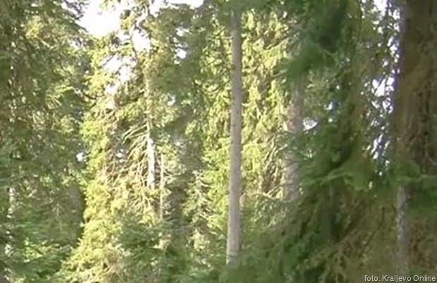 Šuma 2